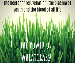 young wheatgrass juice for health
