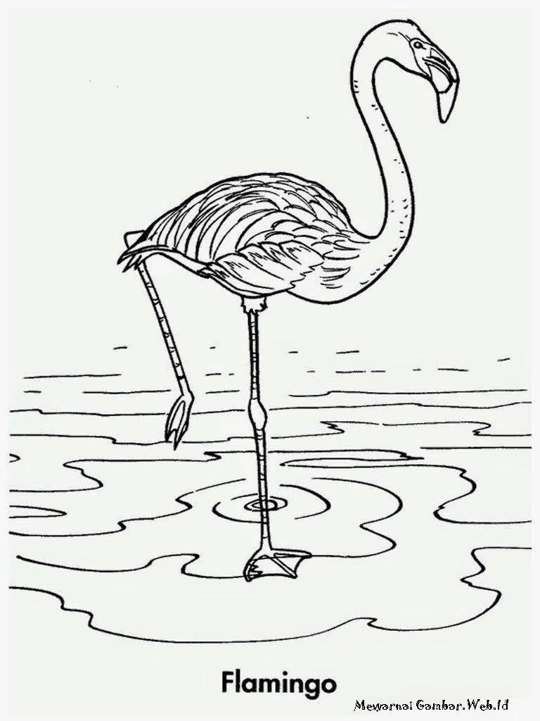 mewarnai gambar burung flamingo berjo Mewarnai Gambar Burung Flamingo