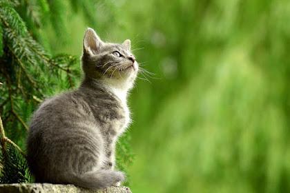 Seputar Mitos Tentang Kucing yang Beredar di Masyarakat