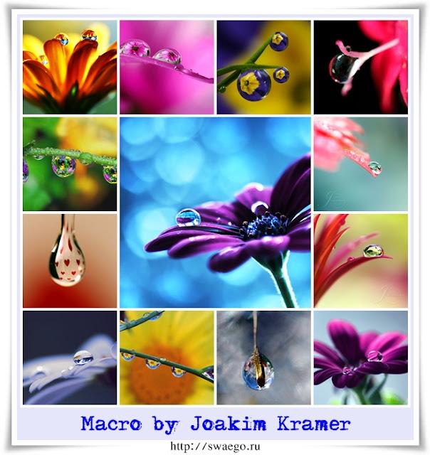 Macro by Joakim Kramer