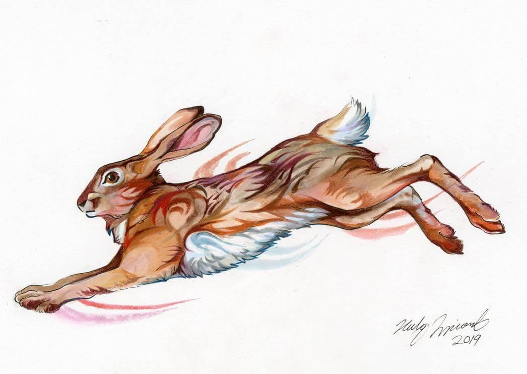 06-Hare-K-Lipscomb-Fantasy-and-Real-Life-Animal-Drawings-www-designstack-co
