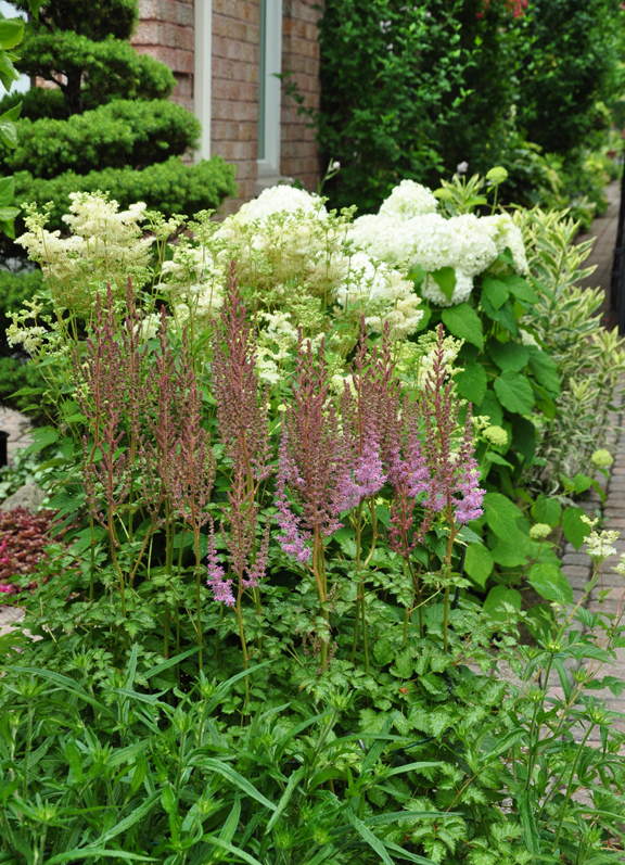 Perfect Three Dogs in a Garden: Hydrangeas: Care Basics/ Old & New Varieties CD47