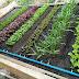 การป้องกันแมลงศัตรูพืช โดยวิธีธรรมชาติ
