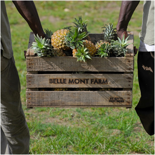 Short Stay | Belle Mont Farm