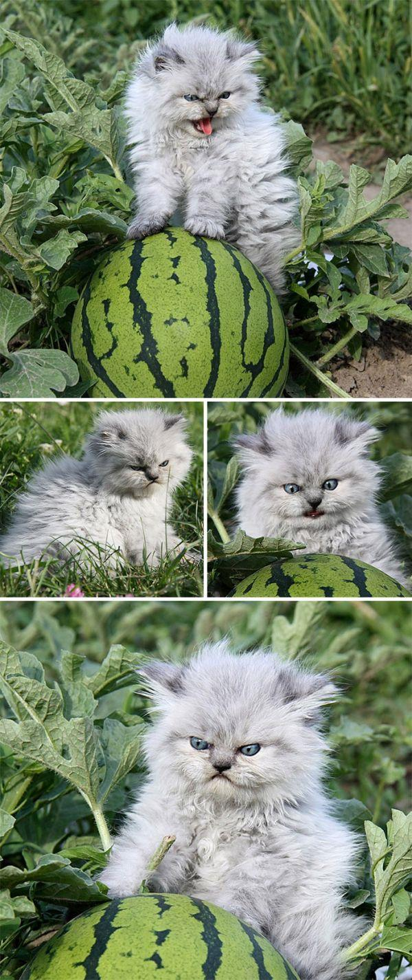 14 chú mèo con với gương mặt như đang hờn cả thế giới