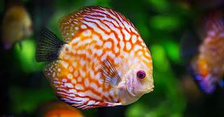Osmorregulación en peces de agua dulce y agua salada