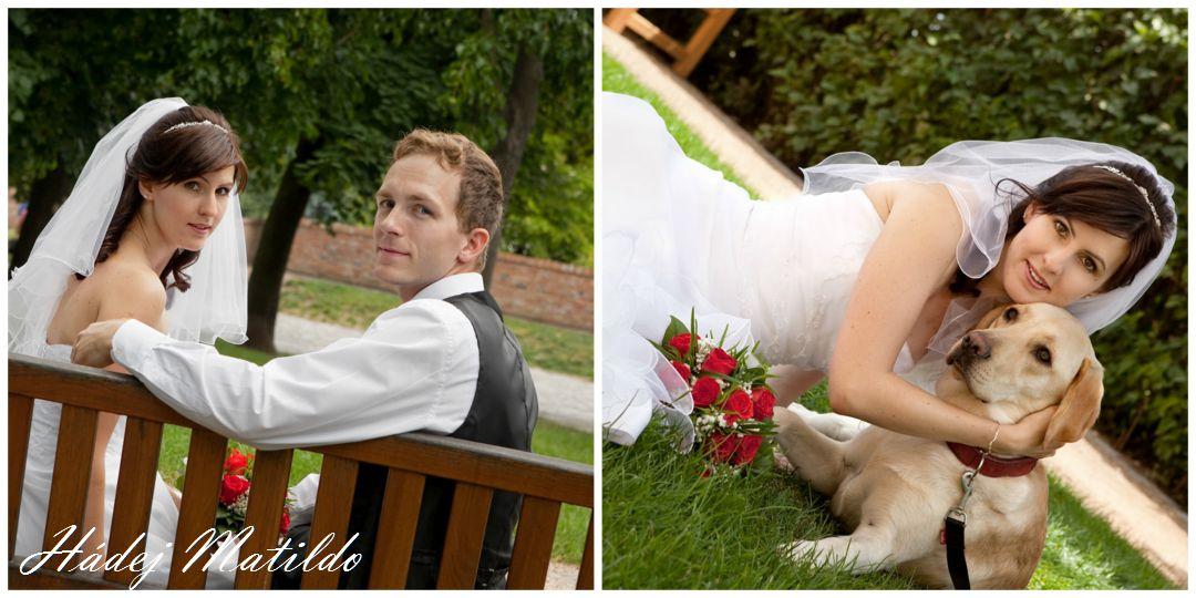 svatba, žádost o ruku, zásnuby