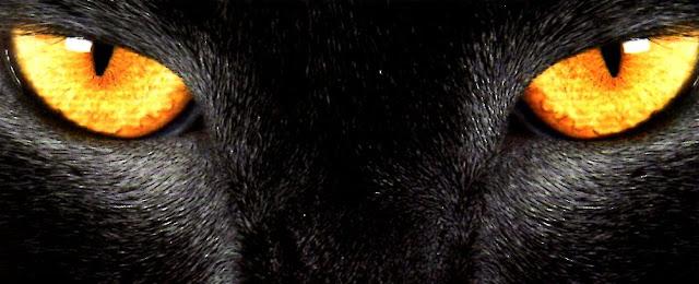 """""""El gato negro"""", de Edgar Allan Poe"""