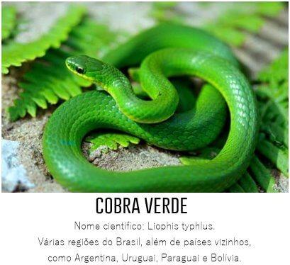 cobra-verde