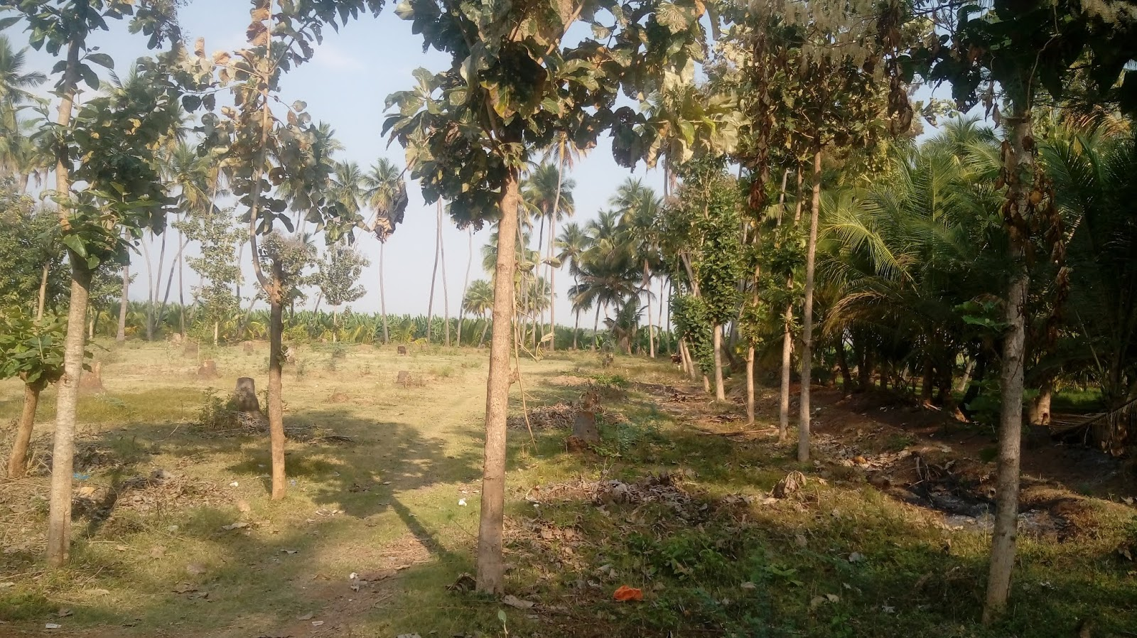 2 Acre agriculture land for sale in near sholavandan, madurai