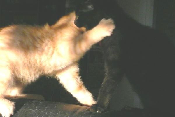 zwei katzen aneinander gewöhnen