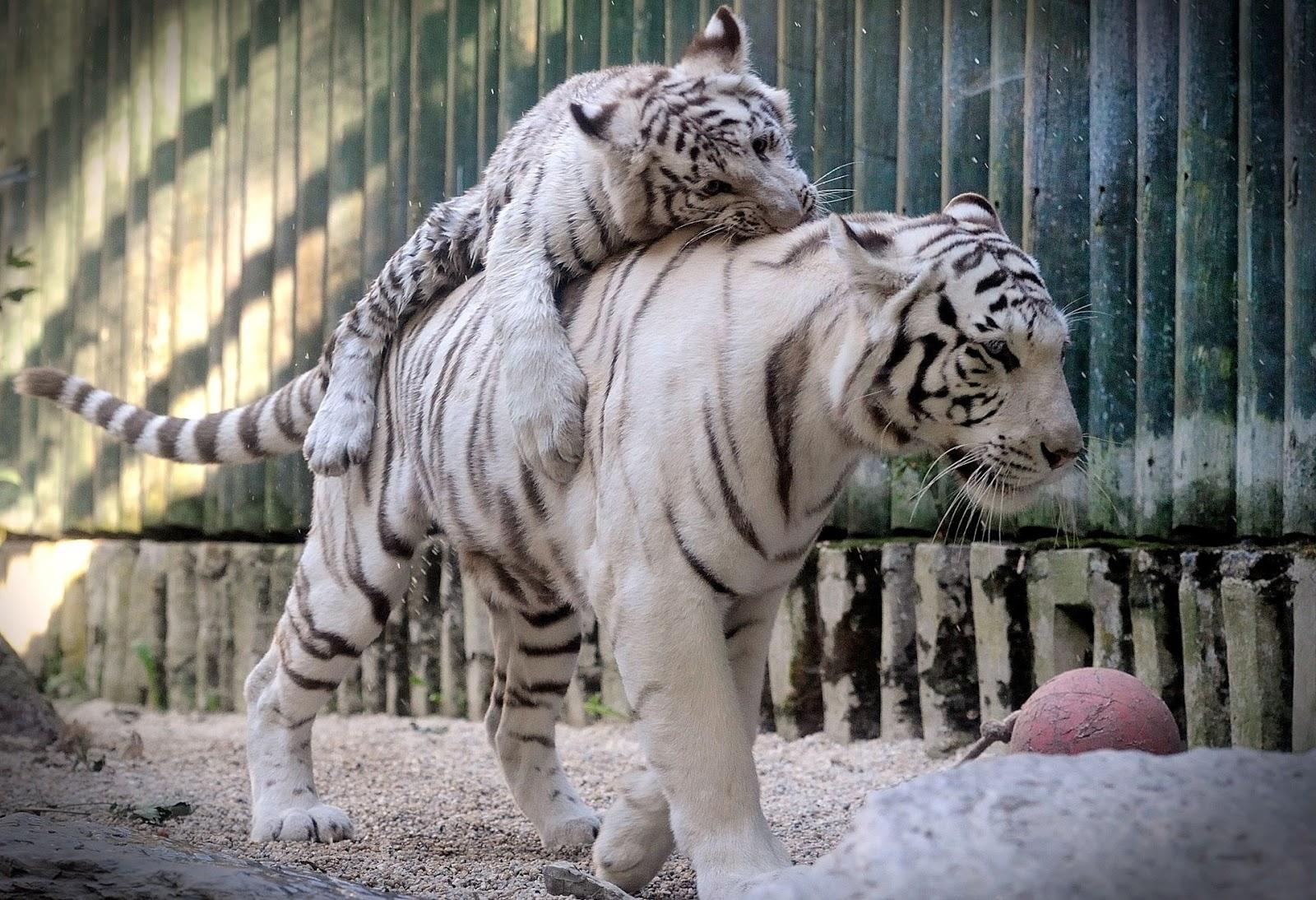 Смешная картинка зоопарка, прикольные картинки прикольные