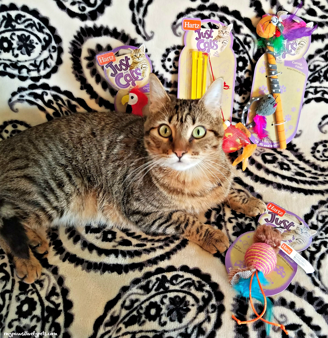 Cat Toy Miuse Bird Catnip