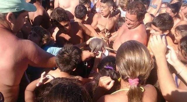 [REPUDIABLE] ESTÚPIDO SUJETO sacó a un delfín bebé del mar para tomarse una selfie y lo terminó MATANDO
