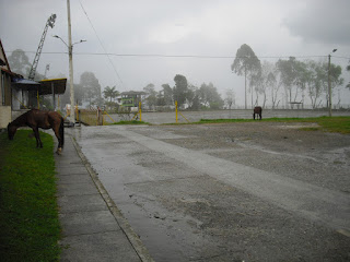 A couple of 'free-roaming' Colombian horses
