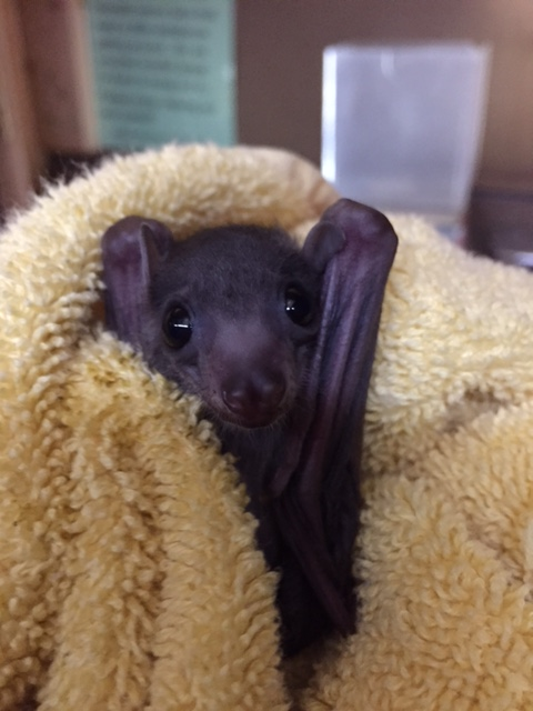 Baby Animals: Bat - Pup 3