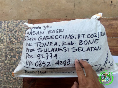 Benih pesanan HASAN BASRI Bone, Sulsel..  (Setelah Packing)
