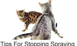 Tips For Stopping Spraying