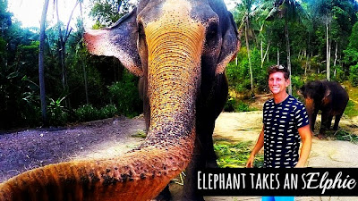 watch incredible moment of an elephant taking his own selfie using a gopro aka elphie with Christian Leblanc in Thailand via geniushowto.blogspot.com amazing viral photos and wildlife captures