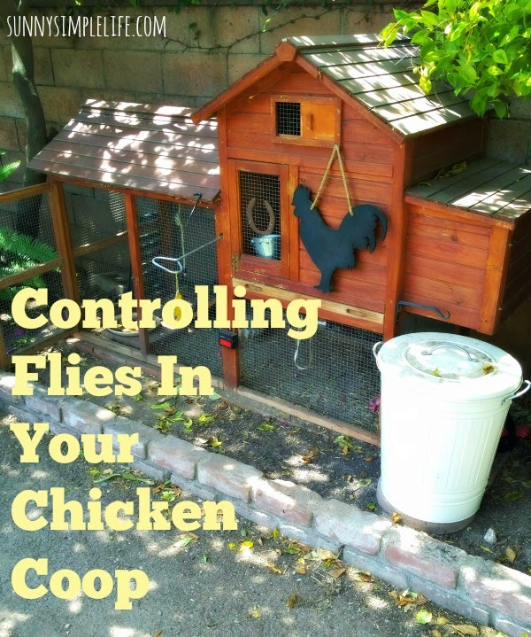 flies in the chicken coop, controlling flies in the coop, fly predators, backyard chickens