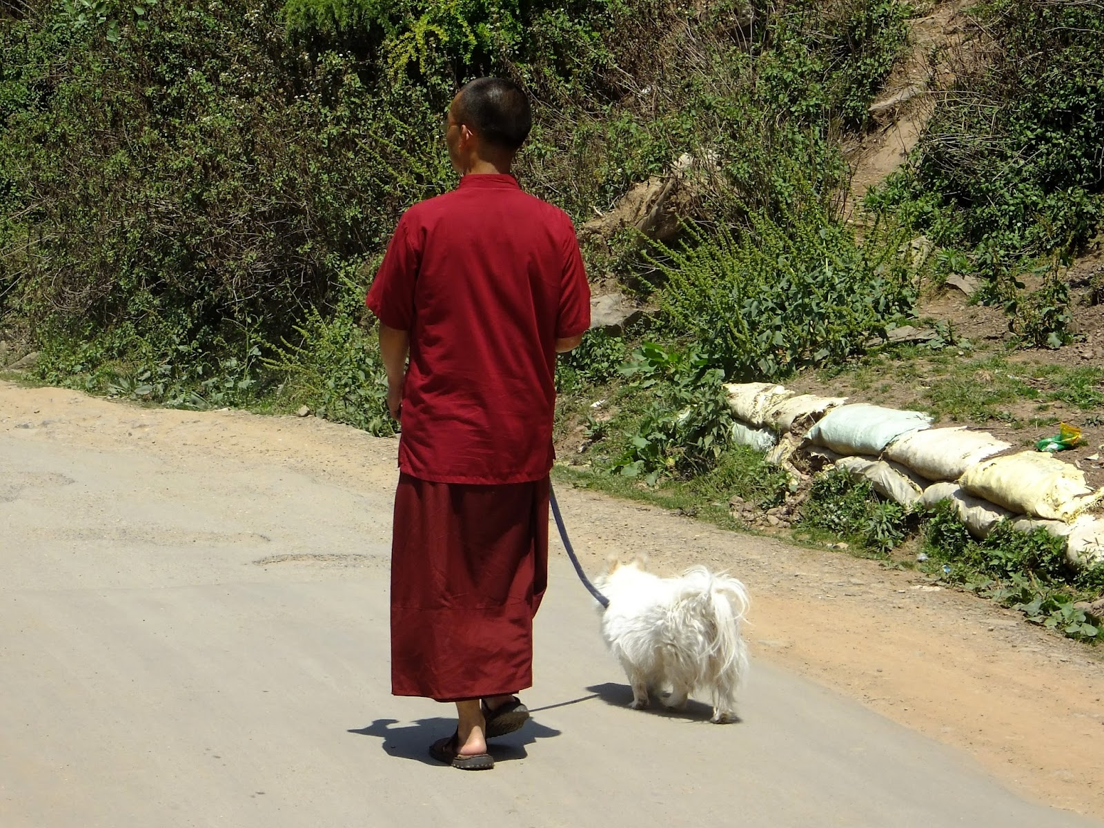 буддисткий монах гуляет с собакой