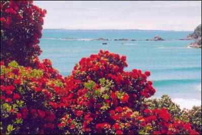 Pohutukawa Coast Auckland