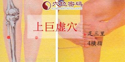 上巨虛穴位 | 上巨虛穴痛位置 - 穴道按摩經絡圖解 | Source:xueweitu.iiyun.com
