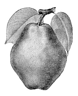 pear fruit artwork illustration vintage clipart digital transfer