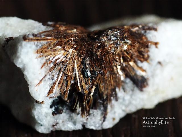 アストロフィライト astrophyllite Khibny,Kola,Murumansk,Russia 黒いものはアルベゾン閃石でしょうか?柱状です。