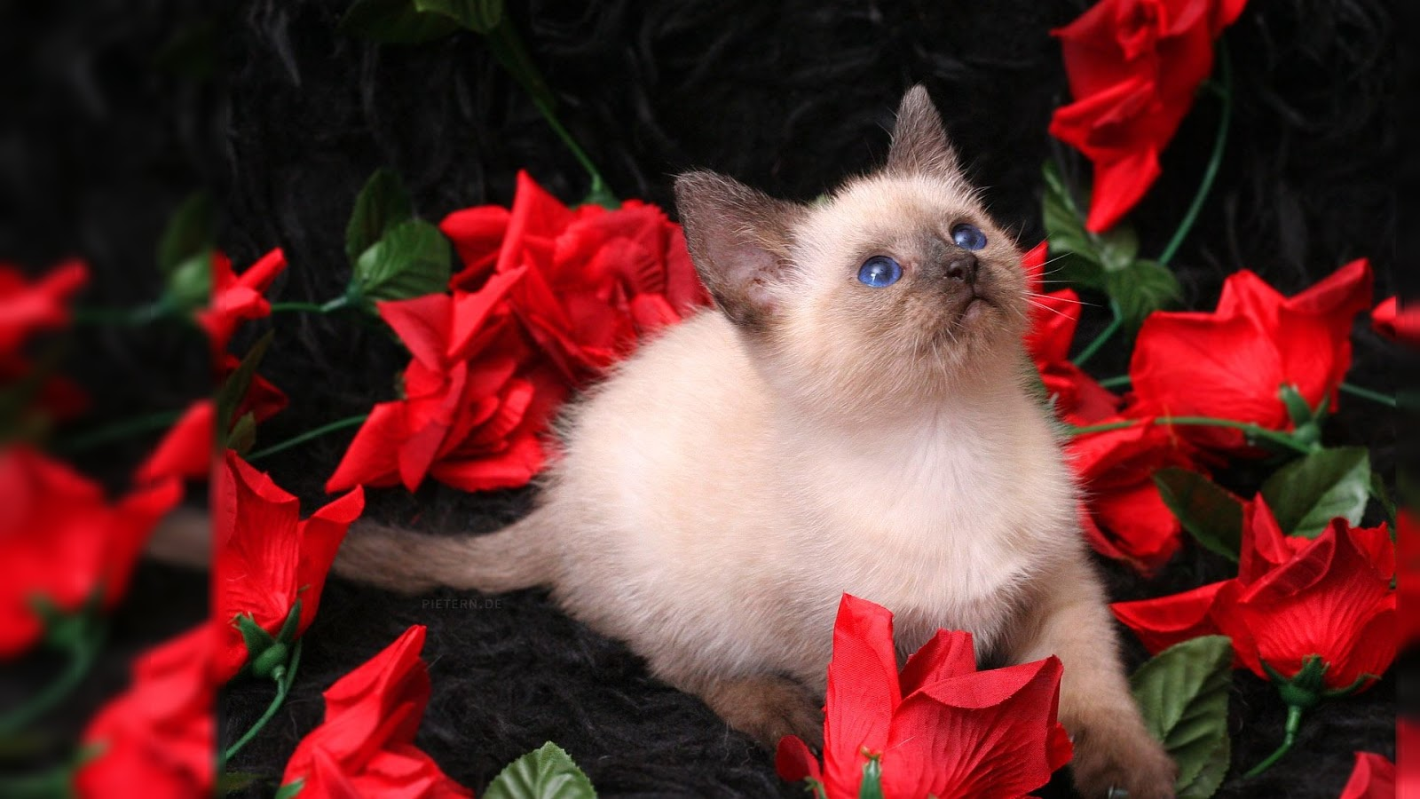 Black Cat Valentine Desktop Wallpaper