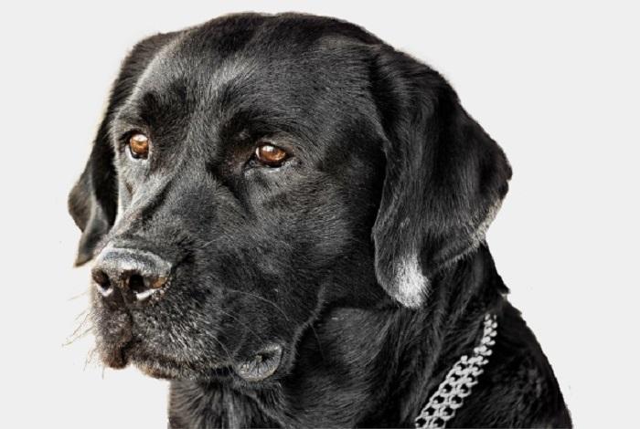 Cane apprendista artificiere espulso dalla Cia