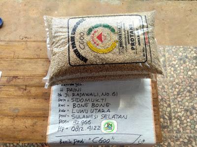 Benih Padi Pesanan    H. PAINI Luwu Utara, Sulsel    Benih Sebelum di Packing.