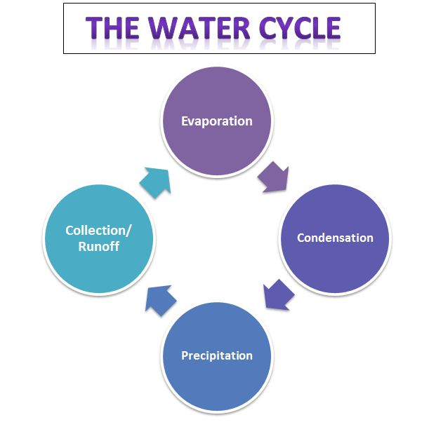 Water cycle word search puzzle and graphic organizer also learning ideas grades  rh learningideasgradesk spot