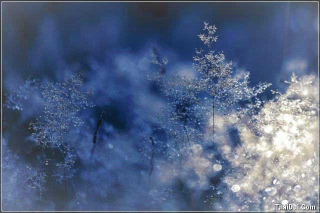 ảnh những giọt nước đóng băng trên lá cây đẹp