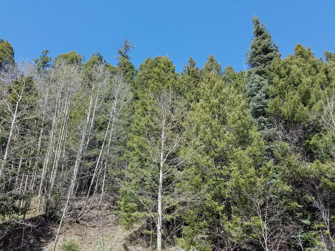 mount lemmon arizona ski valley