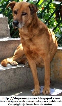 Foto de perro con cara triste de Jesus Gómez
