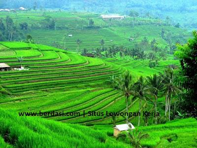 Lowongan Kerja Pertanian dan Perkebunan Terbaru