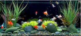 Cara Merawat Ikan Hias Di Akurium dan hiasanya