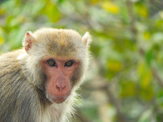 Monkey wildlife Photography
