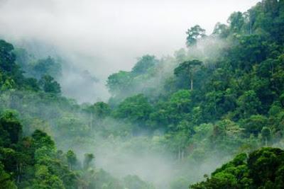 Hilangnya Hutan Tropis Dapat Mengurangi Curah Hujan Hilangnya Hutan Tropis Dapat Mengurangi Curah Hujan