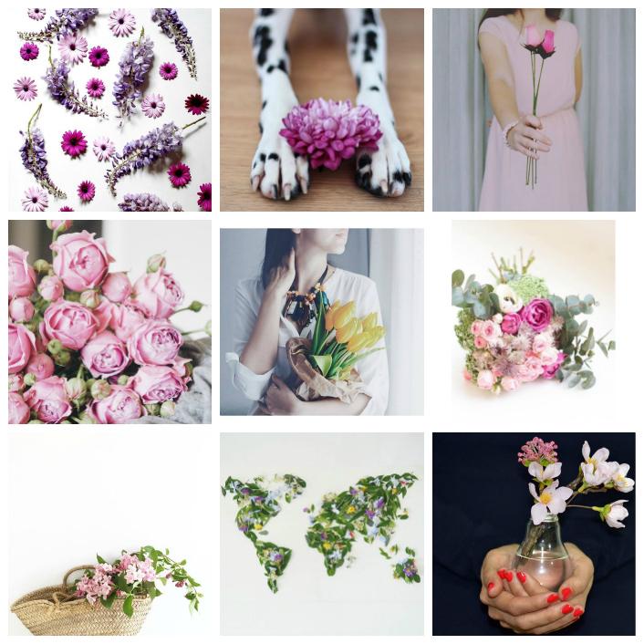 lila, rosa, tulipan