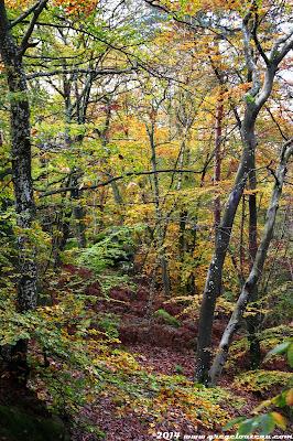 Hêtres à l'automne, Forêt de Fontainebleau, (C) 2014 Greg Clouzeau