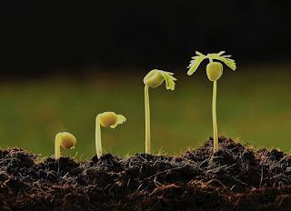 A Provisão de Deus Para o Nosso Crescimento Espiritual