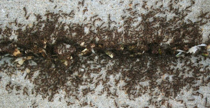 Sprinkle Cinnamon Around Your House, And You Will Never See Ants Again.