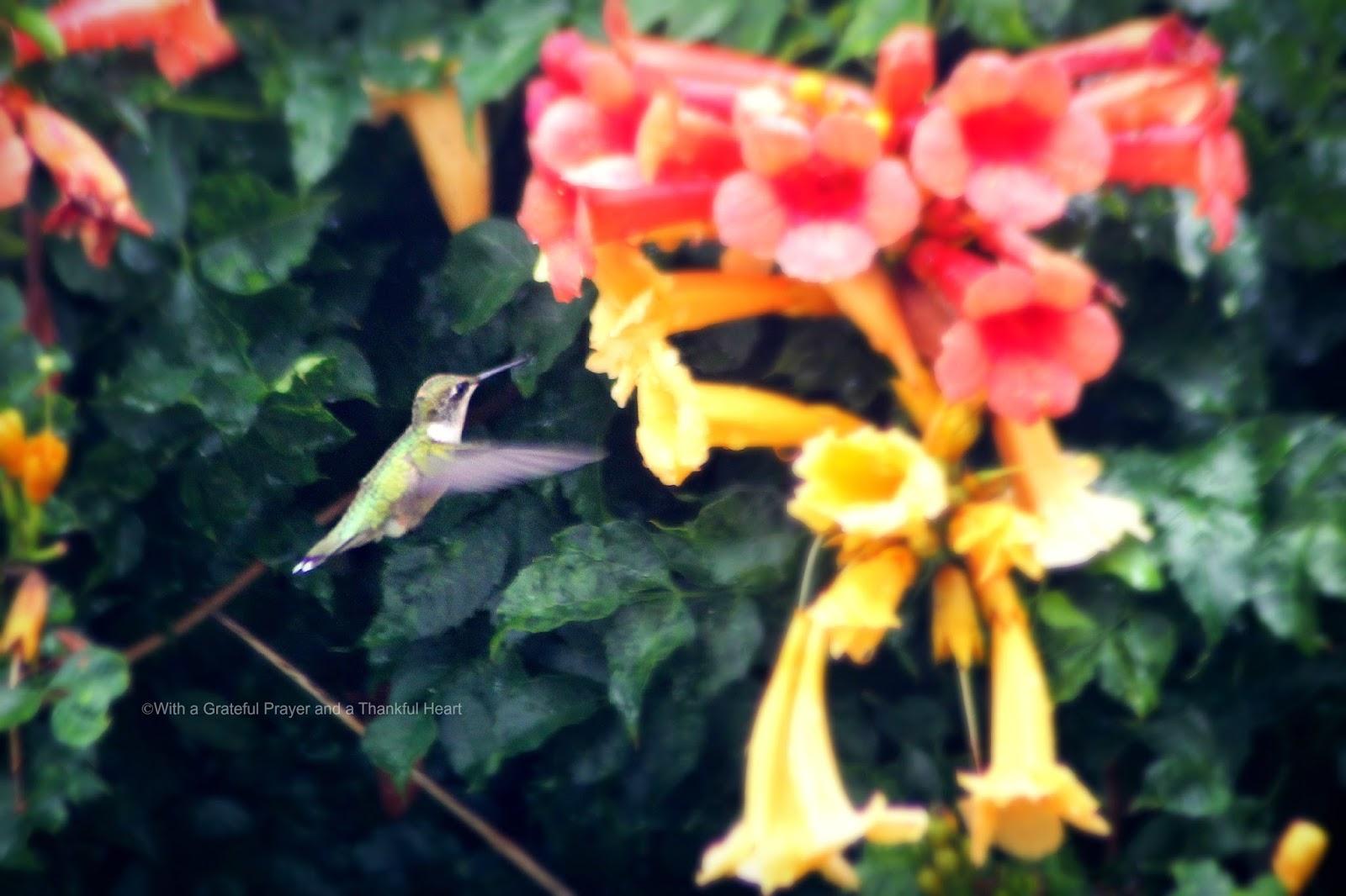 Hummingbirds And Feeders Grateful Prayer Thankful Heart