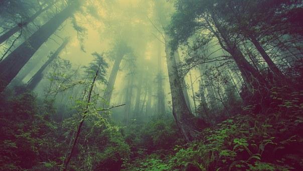 Bagaimana Cara Manusia Menjaga dan Melestarikan Alam? Mar'atus Sholikah