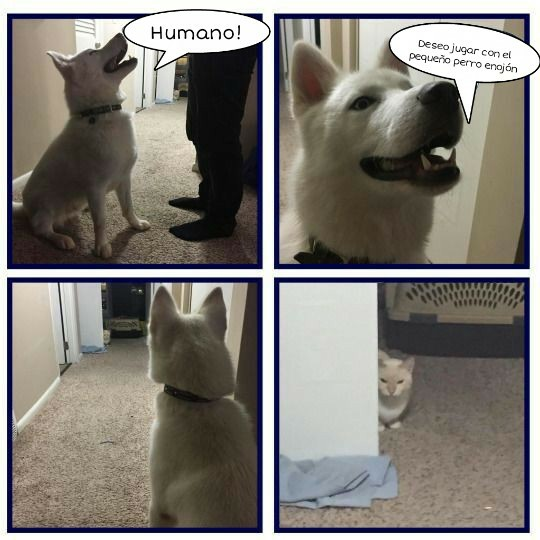 humor perros y gatos