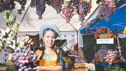 Pequeños productores de uva no participarán de la Vendimia