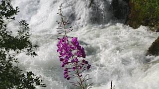 Folgefonna National Park