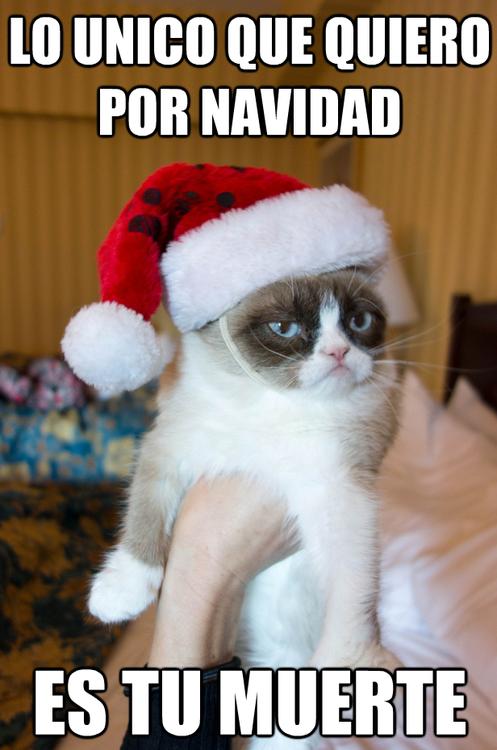 Mucho Gracias Cat Meme